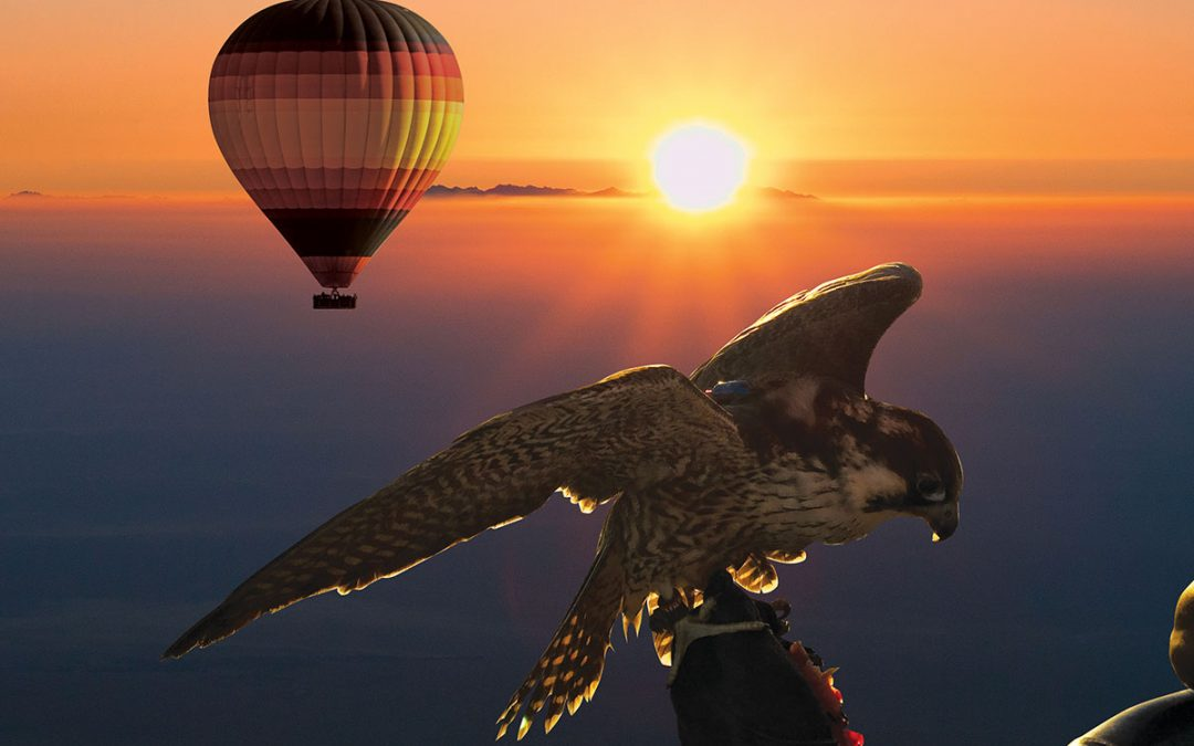 Flying with Falcons – a world first in a hot air balloon