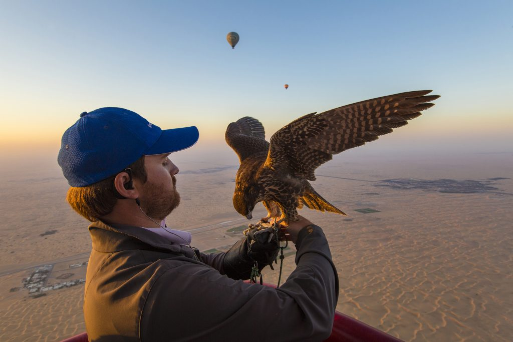 Hot Air Balloon Falconry
